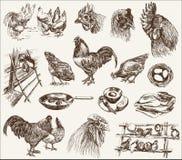 Criação de animais da galinha ilustração do vetor