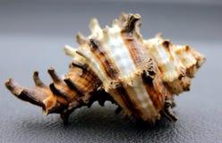 Criação do verão na praia com as criaturas naturais do mar Imagens de Stock