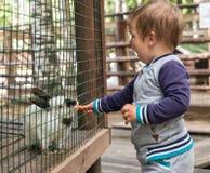 A criança alimenta o coelho Fotos de Stock