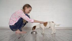 A criança alimenta um cão de uma bacia vídeos de arquivo