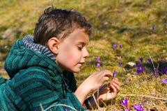 Criança bonita entre flores do açafrão Imagens de Stock Royalty Free