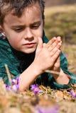 Criança bonita entre flores do açafrão Fotografia de Stock