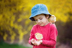 Criança bonito doce, menino pré-escolar, jogando com pouco qui recém-nascido Fotos de Stock Royalty Free