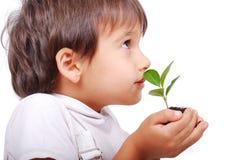 Criança bonito pequena que prende a planta verde Imagem de Stock