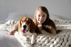 Criança bonito que descansa com o cão do lebreiro no sofá Lebreiro e menina que olham a câmera junto Cão engraçado e gir consider foto de stock royalty free
