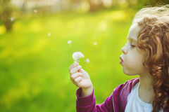 Criança com o dente-de-leão branco em sua mão Fundo que tonifica o insta Foto de Stock Royalty Free