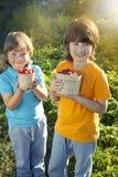 Criança com o jardim ensolarado das morangos com um dia de verão Imagem de Stock