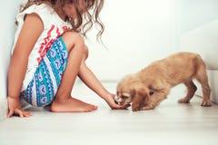 Criança com os cães pequenos que jogam em casa Jogo da menina com puppie foto de stock royalty free