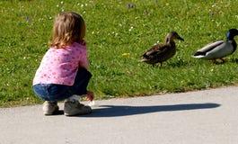 Criança com patos Fotos de Stock