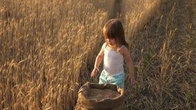 Criança com trigo à disposição o bebê guarda a grão na palma pouco filho, filha do fazendeiro, está jogando no campo vídeos de arquivo