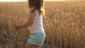 Criança com trigo à disposição o bebê guarda a grão na palma uma criança pequena está jogando a grão em um saco em um campo de tr video estoque