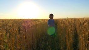 A criança corre ao longo do campo de trigo com um avião do brinquedo lentamente no por do sol A criança está feliz e ri vídeos de arquivo