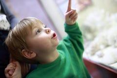 Criança da curiosidade no museu fotografia de stock royalty free