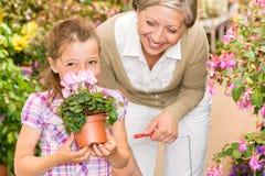 A criança da loja do jardim com cheiro da avó cyclamen Fotos de Stock Royalty Free