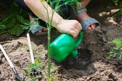 Criança da menina nos raios que plantam sementes na exploração agrícola na cama Imagens de Stock Royalty Free