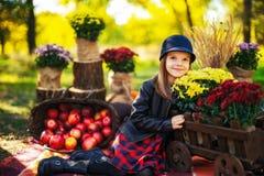 A criança de sorriso com a cesta das maçãs vermelhas que sentam-se no outono estaciona fotos de stock royalty free