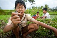 A criança deficiente trava peixes pequenos em uma vala Fotos de Stock