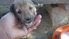 Criança do cão fotografia de stock royalty free