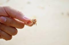 Criança do caranguejo Imagens de Stock