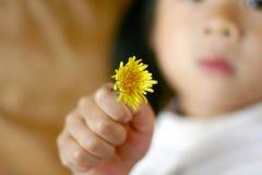 Criança do dente-de-leão Fotos de Stock Royalty Free