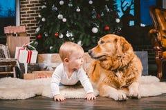 Criança do homem da amizade e animal de estimação do cão Feriados de inverno do ano novo do Natal do tema Bebê na árvore decorada fotografia de stock royalty free