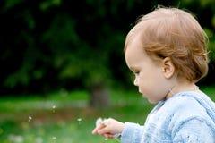 Criança e dente-de-leão bonitos Foto de Stock Royalty Free