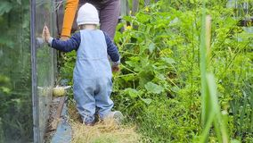 A criança e a mulher que verificam a colheita dos pepinos vídeos de arquivo