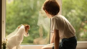 A criança e seu amigo do cachorrinho olham para fora a janela vídeos de arquivo