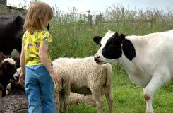 Criança e vitela Fotografia de Stock