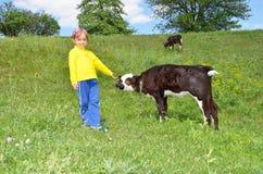 A criança e a vitela Imagens de Stock Royalty Free