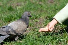 A criança está alimentando um pássaro Foto de Stock Royalty Free