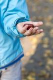 A criança está mostrando a castanha em sua mão esquerda foto de stock