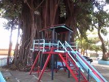 Criança feliz do parque da raiz da árvore fotografia de stock