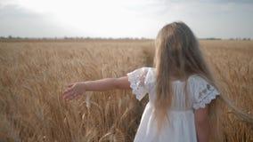 Criança feliz no campo, menina que anda através do prado amarelo amadurecido da grão e que toca no trigo com sua mão na colheita filme