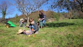 Criança feliz que põe maçãs dentro da cesta de vime video estoque