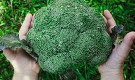 A criança guarda brócolis Fotos de Stock Royalty Free