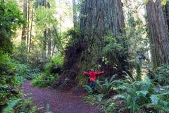 Criança na floresta da sequoia vermelha imagens de stock royalty free