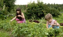 Criança na horta fotos de stock royalty free