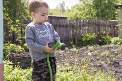 Criança nas flores molhando do jardim fotos de stock royalty free