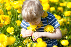 Criança no campo de florescência foto de stock