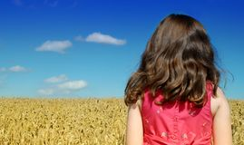 Criança no campo de trigo Imagens de Stock Royalty Free