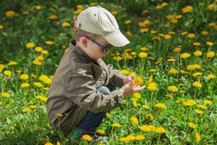 A criança no gramado da grama verde com dente-de-leão floresce no dia de verão ensolarado Criança que joga no jardim Imagem de Stock