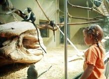 Criança no JARDIM ZOOLÓGICO Imagens de Stock