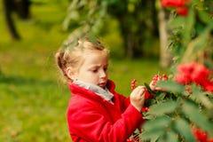 Criança no parque no outono Guarda Rowan alaranjado em suas mãos menina no revestimento vermelho com as folhas de outono na belez Fotografia de Stock