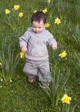 Criança nos daffodils Fotos de Stock