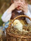 A criança olha acima em uma galinha amarela macia nova fotos de stock
