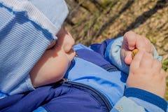 A criança olha a bolota Criança na floresta Fotos de Stock