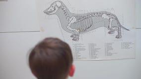 A criança olha o plano de esqueleto do cão video estoque