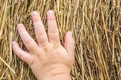 A criança pequena conhece a natureza no campo e toca no feno seco fotos de stock