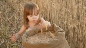 A criança pequena está jogando a grão em um saco em um campo de trigo criança com trigo à disposição o bebê guarda a grão na palm